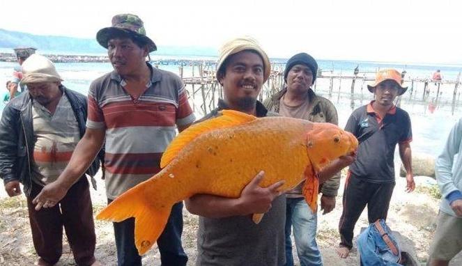 Kecelakaan KM Sinar Bangun dan Legenda Ikan Mas